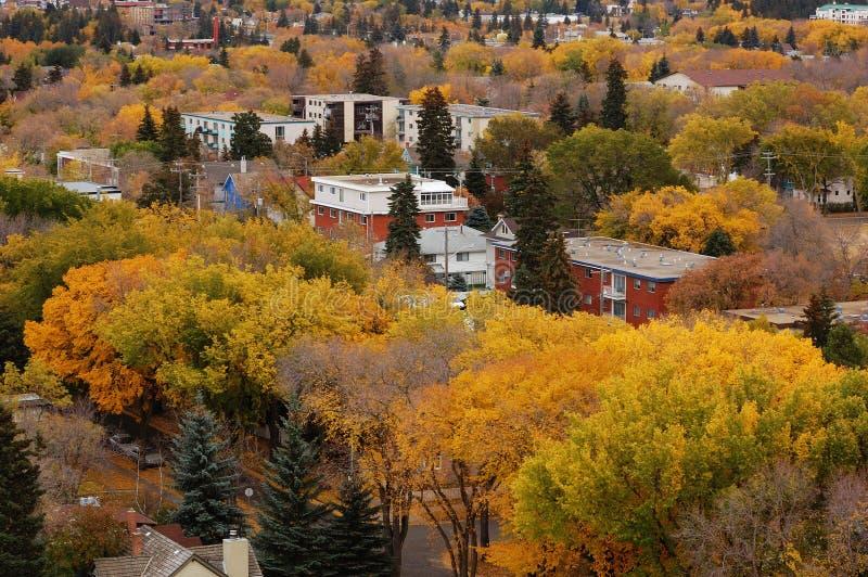autumn Edmonton fotografia royalty free