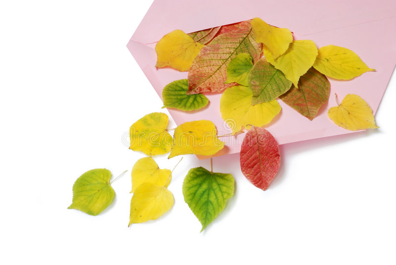 Autumn envelope. Pink envelope with autumn leaves stock photo