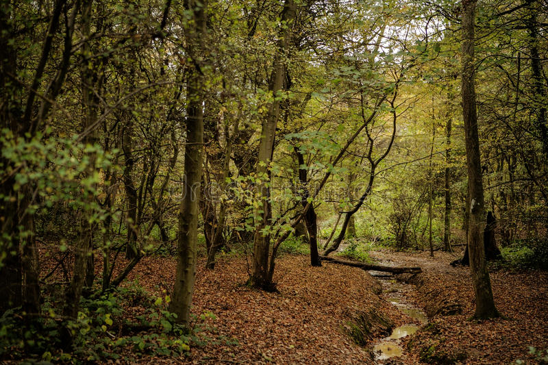 Autumn Fal royalty-vrije stock afbeelding