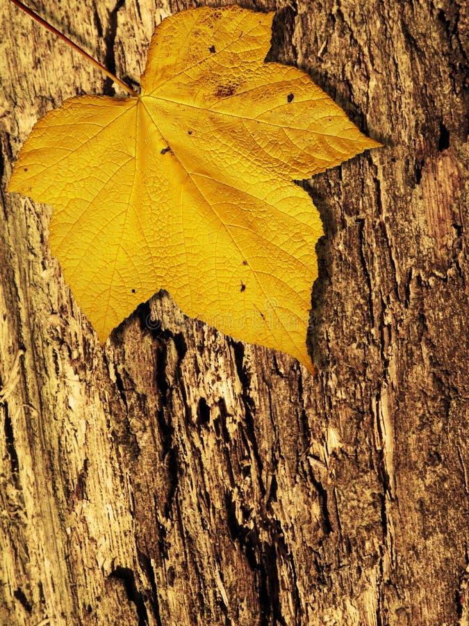 Free Autumn Fall Royalty Free Stock Image - 10602276