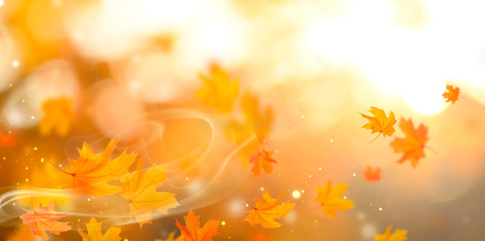 Autumn. Fall abstract autumnal background with colorful leaves. And sunflares stock image