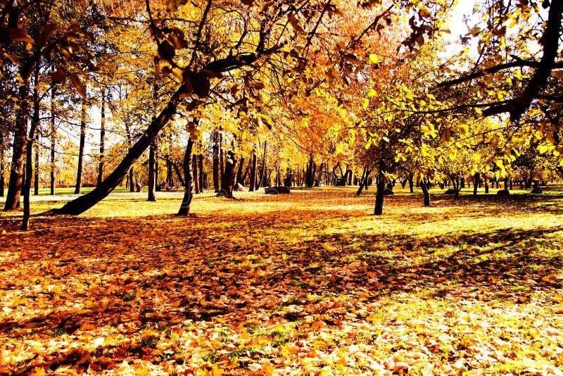 Autumn. Fall. Autumnal Park. Autumn Trees and Leaves stock photos