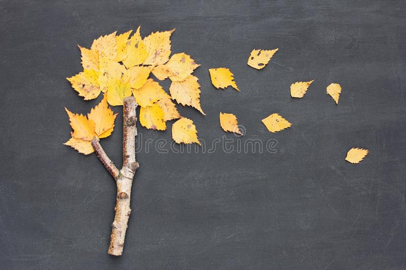 Autumn fall or back to school concept. Wind blows yellowed leaves from birch tree made from stick on blackboard background. Flat stock photo