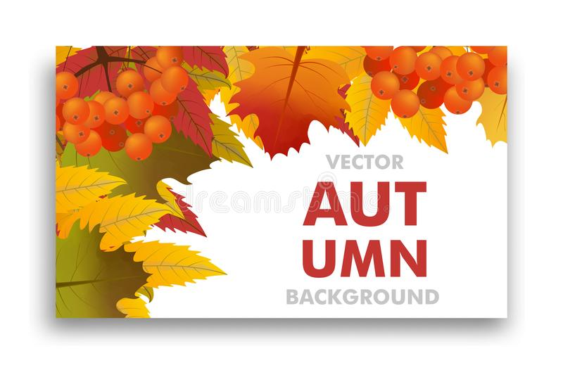 Autumn or fall background with branch of rowan and maple leaves. Frame Sale or Back to School. Vector royalty free illustration