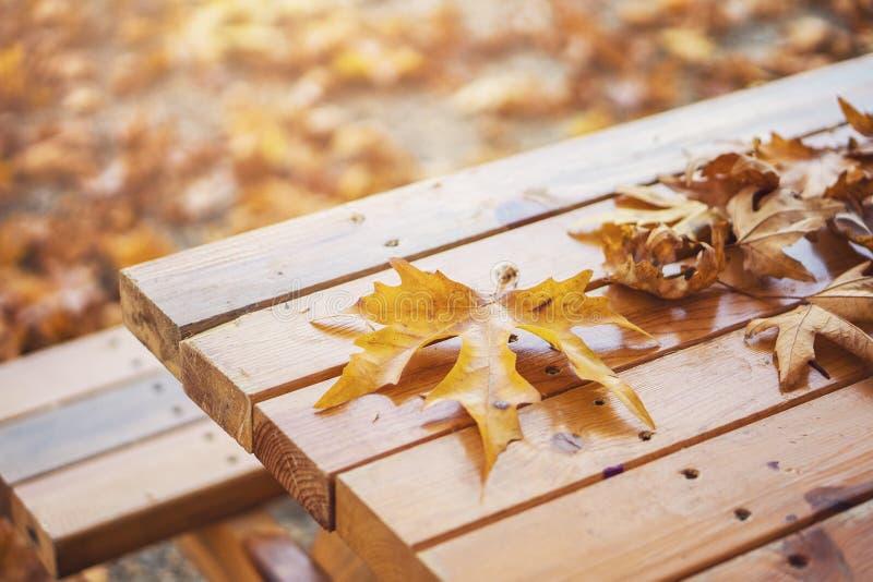 Autumn Fall Background, Natur, Retro-, Platanenblätter lizenzfreie stockbilder