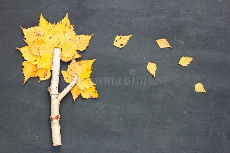 Autumn Fall begrepp Bj?rktr?det som g?ras fr?n, fattar och gula sidor p? svart tavlabakgrund Lekmanna- l?genhet arkivfoto