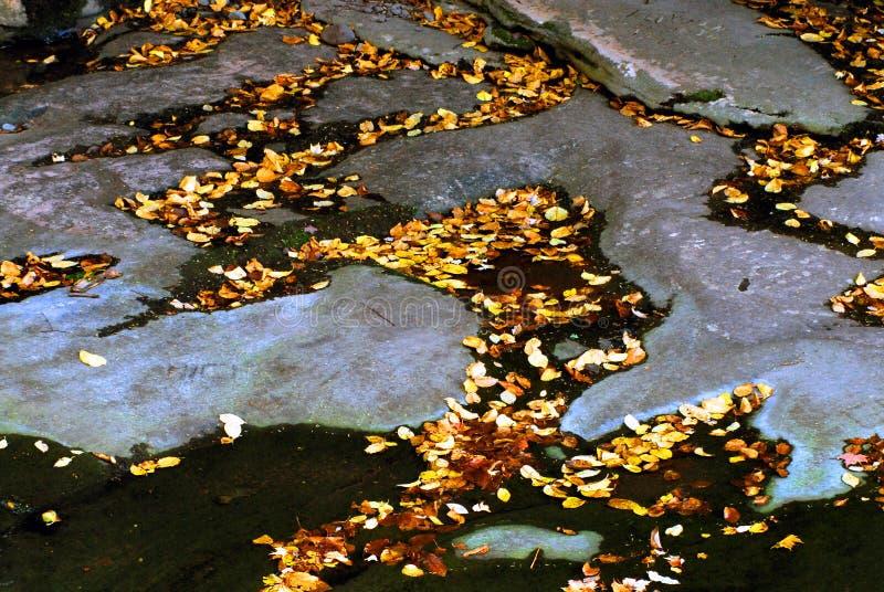 AUTUMN-FALL-, bunte Blätter, die zwischen Steine in einem Strom schwimmen lizenzfreies stockfoto
