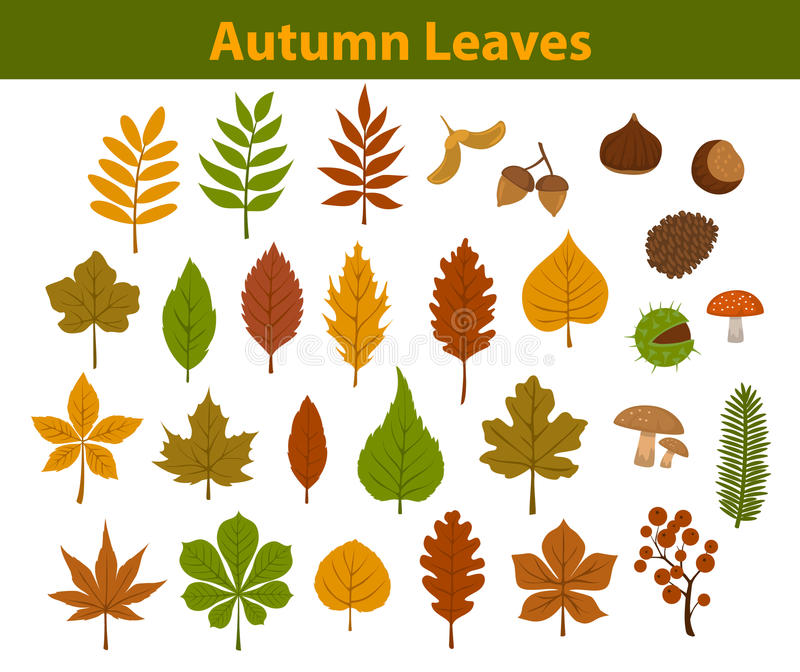 Autumn fall colorful leaves collection set. Autumn fall colorful leaves collection vector illustration