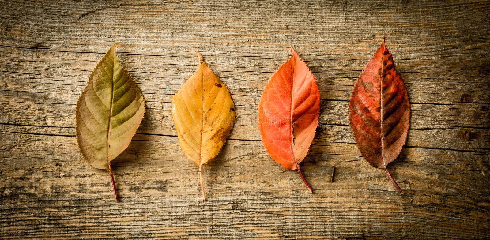 Autumn fall - colorful leaves on wooden background stock photos