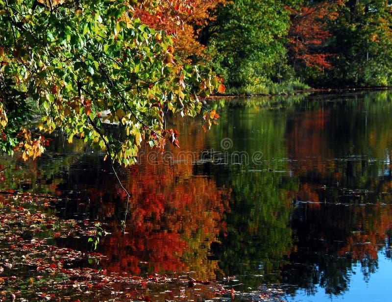 AUTUMN-FALL- colori splendidi di caduta riflessi in un lago fotografie stock