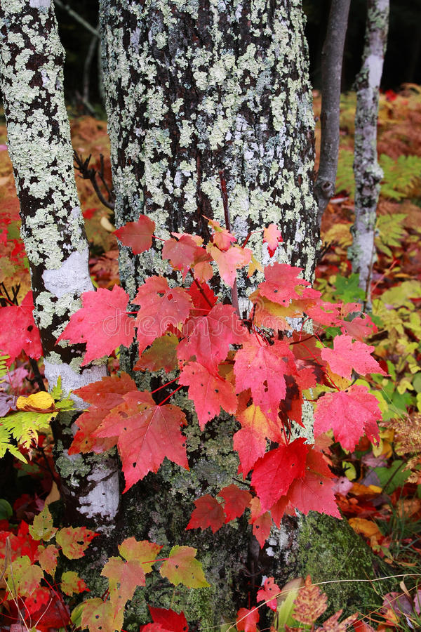 Autumn Fall Colors royalty free stock images