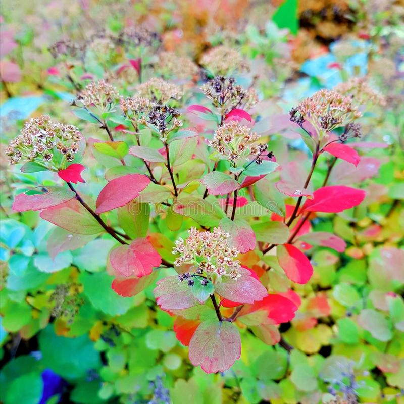 Autumn Berry Blid som royalty free stock image