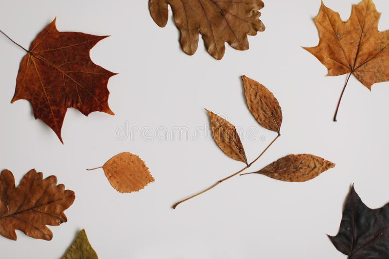 Autumn, fall composition. Beautiful background of dried leaves. Creative autumn pattern, postcard. Flat lay, top view. stock image