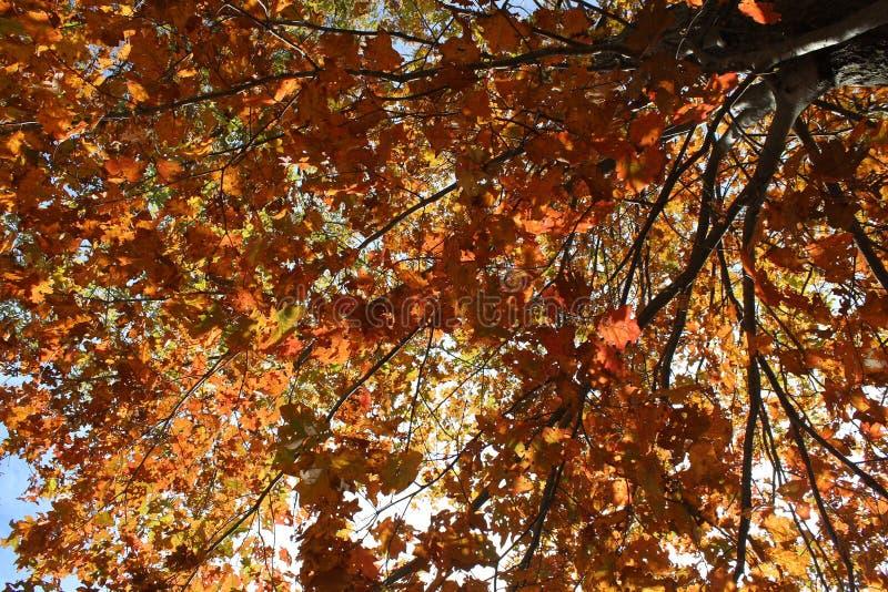 Autumn Fall Foilage fotos de archivo
