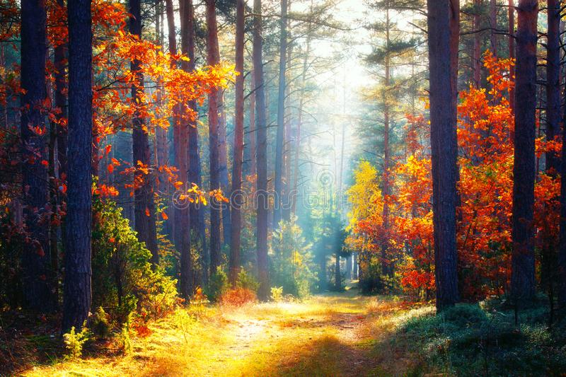 Autumn. Fall forest landscape royalty free stock photography