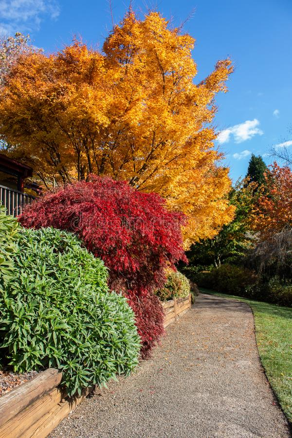 Autumn fall golden leaves in orange, yellow, red in garden setting with winding concrete pathway edged by wooden retaining wall, g stock image
