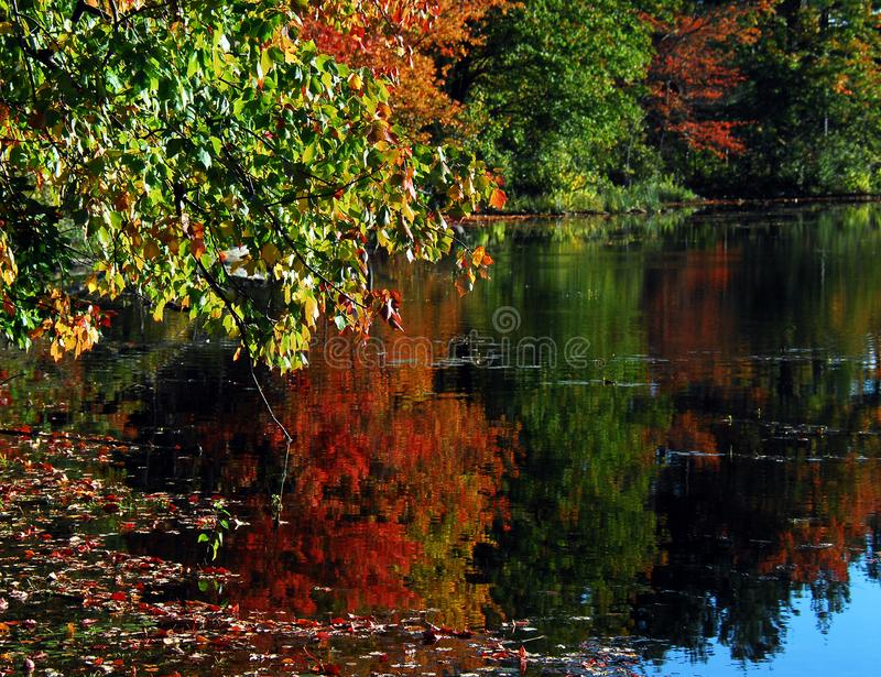 AUTUMN-FALL- Gorgeous Fall Colors Reflected in a Lake stock photos