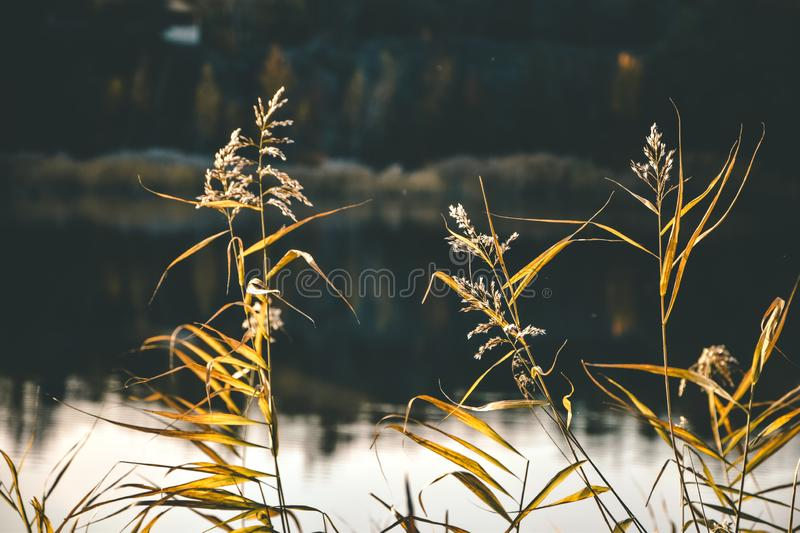 Autumn fall grass lake water reeds spring stock photography