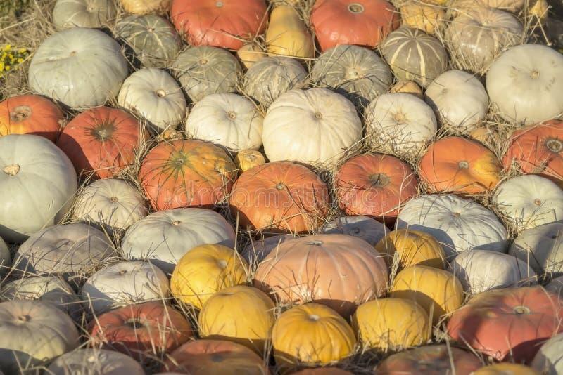 Autumn Fall-Hintergrund mit reifen verschiedenen organischen Kürbisen auf trockenem Stroh Herbstblattrand mit verschiedenem Gemüs stockbilder