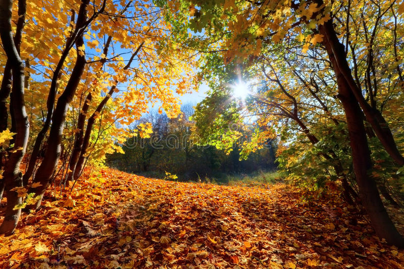 Autumn, fall landscape in forest stock images