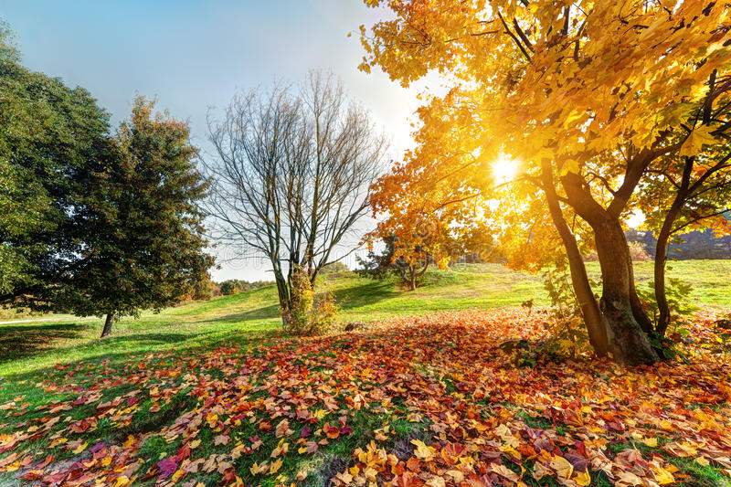 Autumn, fall landscape in park stock photo