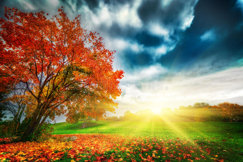 Autumn, fall landscape in park. Colorful leaves, sunny blue sky at sunset royalty free stock photos