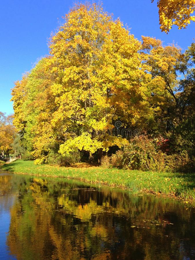 Autumn, fall landscape. Tree with colorful leaves near little pond royalty free stock photography