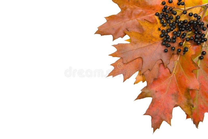 Autumn fall leaf corner royalty free stock image