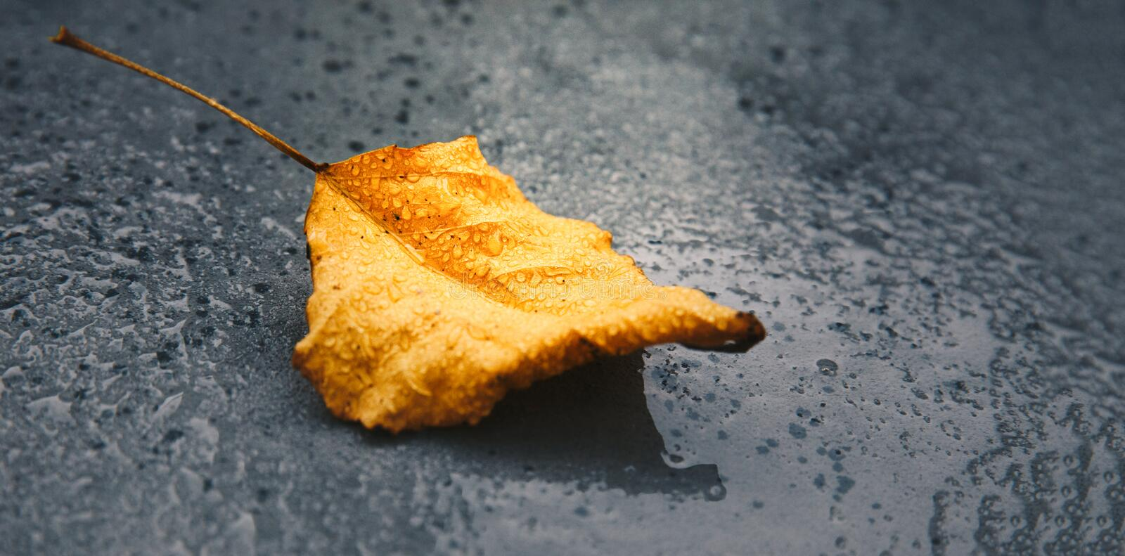 Autumn fall leaf on wet asphalt with water rain drops macro,copy space and web site banner stock photos