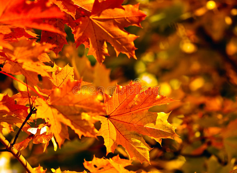 Autumn fall leaves royalty free stock photos