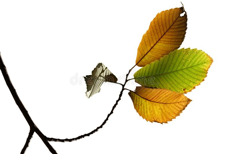 Autumn fall leaves stock photo