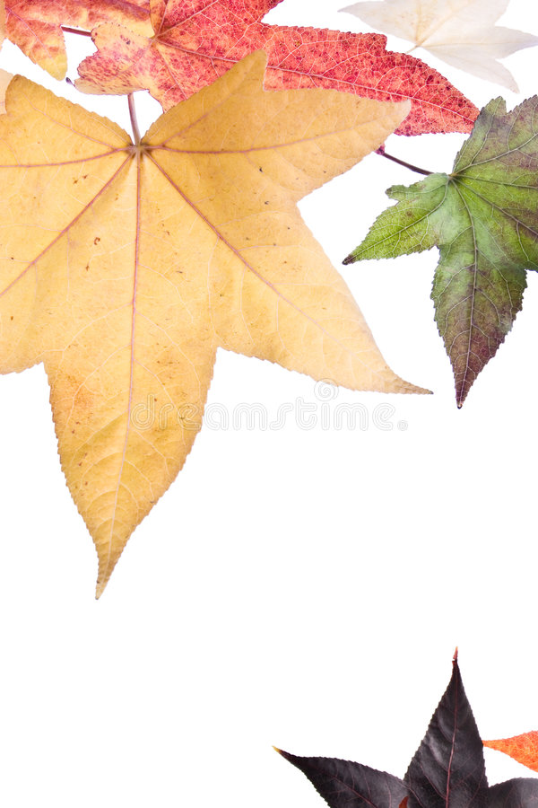 Autumn Fall Leaves. Background. Isolated on white royalty free stock photos