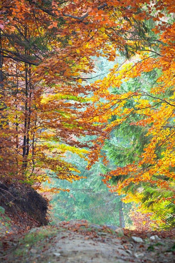 Autumn Fall Leaves colorido na paisagem e no passeio da floresta foto de stock