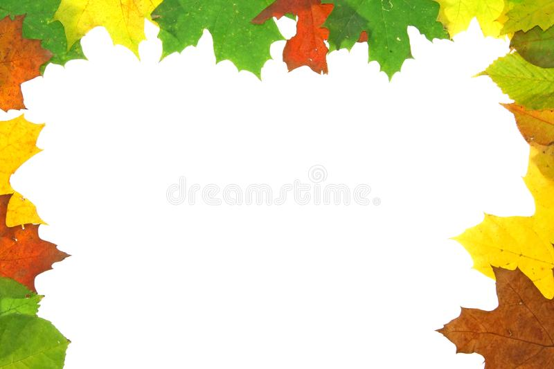 Autumn fall leaves - frame stock images