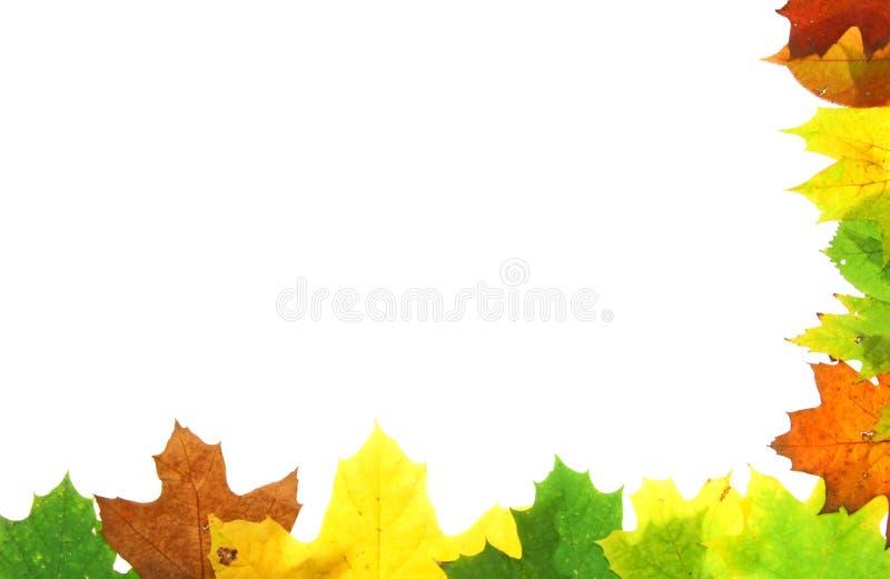 Autumn fall leaves - frame