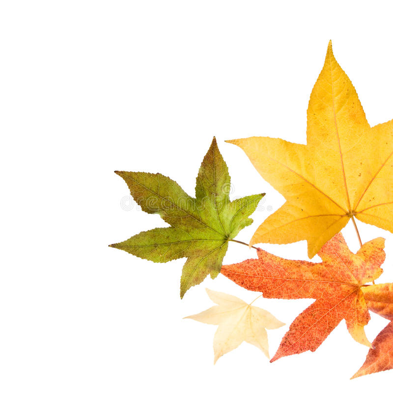 Autumn fall Leaves. Autumn leaves over white background royalty free stock image