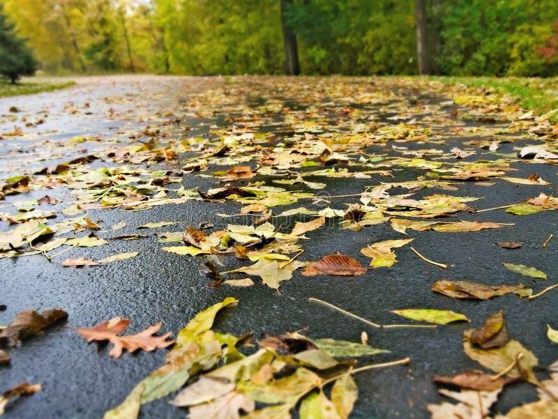 Autumn Fall Leaves på säsong för stads- miljö för gata royaltyfri bild