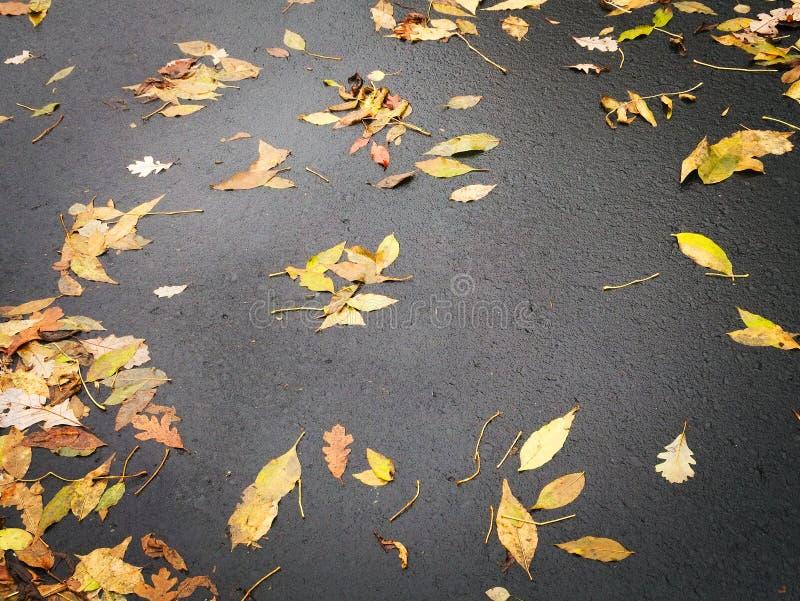 Autumn Fall Leaves på säsong för stads- miljö för gata arkivbilder