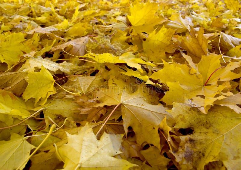 Autumn (fall) leaves in Rosenstein Park, Stuttgart