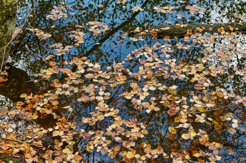 Autumn fall leaves on the water. Perfect nature seasonal background image stock photo
