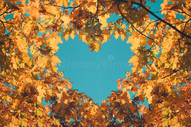 Autumn fall love background. Orange and yellow leaves in heart shape of background of blue sky. Heart-shaped sky through autumn stock photography