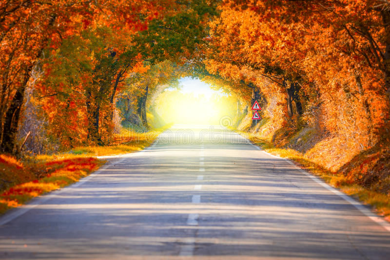 Autumn Fall Road-Landschaft - Baumtunne und -magie beleuchtet stockfotos