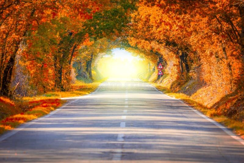 Autumn Fall Road landskap - trädtunne och magi tänder arkivfoton