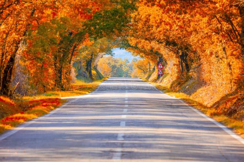 Autumn Fall Road landskap - verklig trädtunne arkivfoton