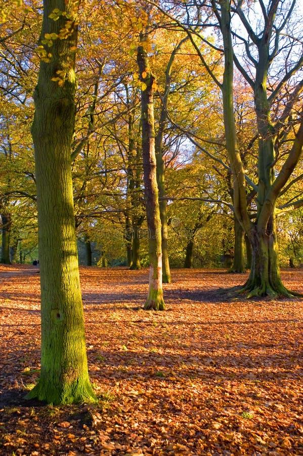 Autumn (fall) scene royalty free stock image