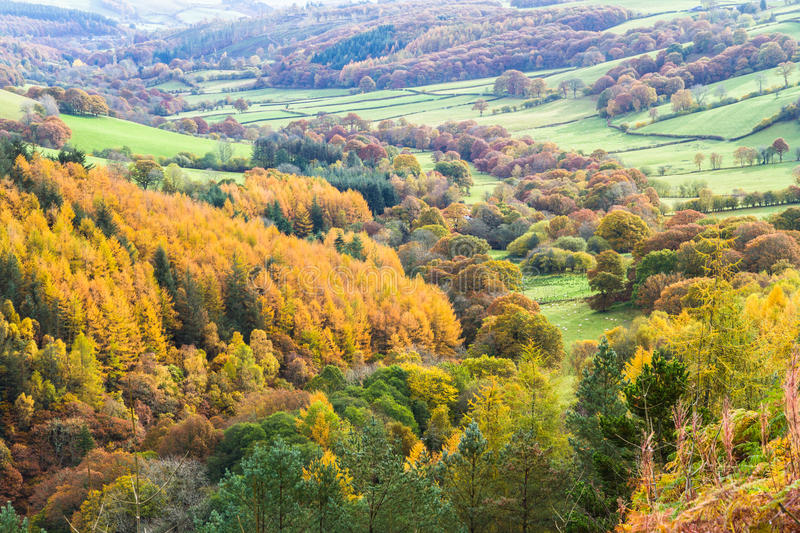 Autumn Fall scene, grass and Trees, Wales, United Kingdom. Pastoral fields, trees and hedges in morning mist, Autumn Fall. Powys, Wales. Low sunlight, green royalty free stock photos