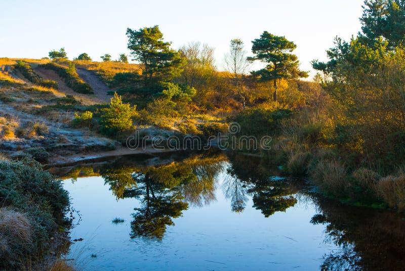 Autumn on Woodbury Common, Devon royalty free stock photography