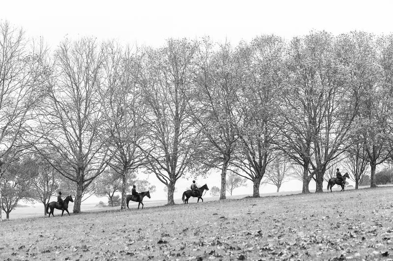 Autumn Horses Riders Landscape. Autumn fall season race horses riders going to stables in scenic training landscape with trees dry leaves scattered on fields royalty free stock image