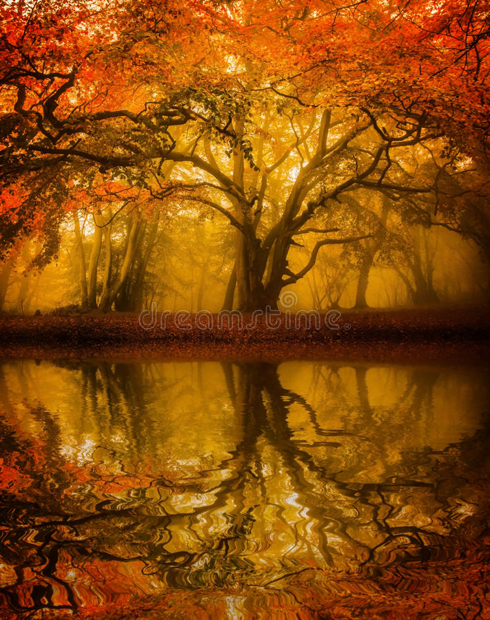 Autumn Fall tree refelction. Book cover format of an Autumn / Fall tree with water reflection stock photos