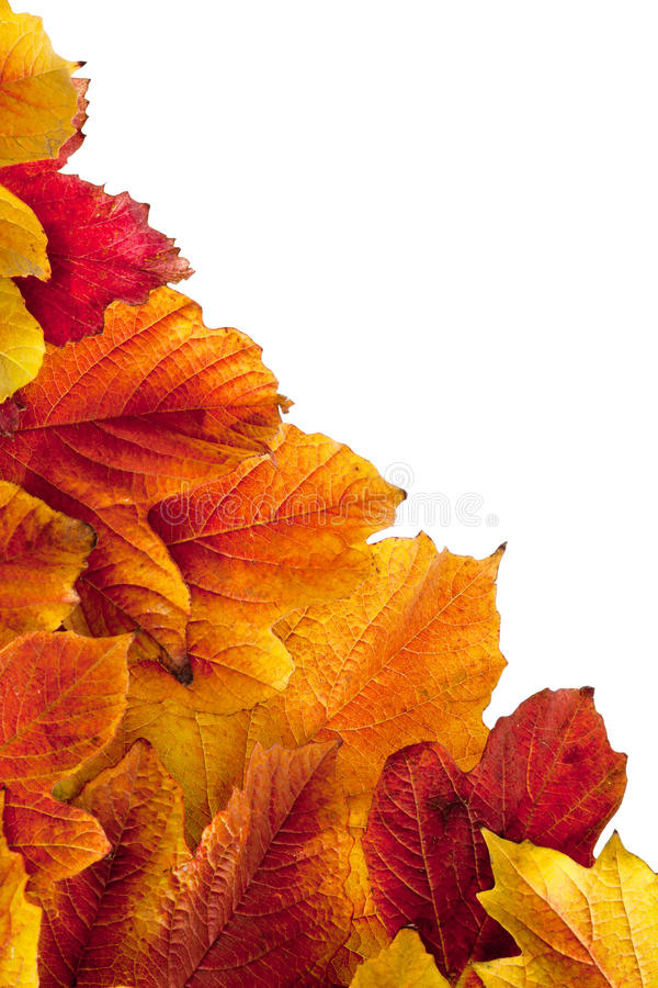 Download Autumn. Fall Viburnum Leaves Stock Images - Image: 21840104
